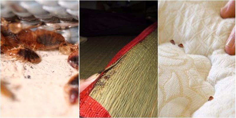 Cách diệt rệp giường tận gốc