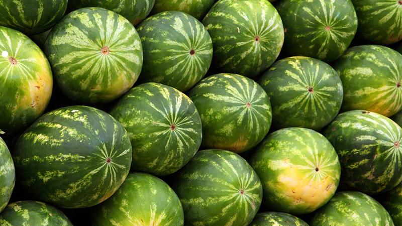 Cách chọn dưa hấu ngon - Xem rốn quả dưa và cân nặng