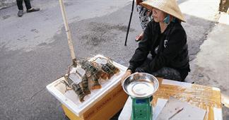 Tôm hùm giá rẻ tràn vào Sài Gòn, người dân vùng bão mất tiền tỷ