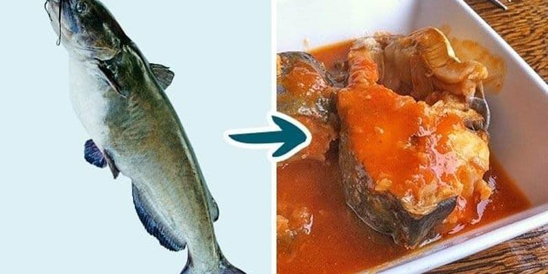 Loại cá này vô cùng nguy hiểm đối với người dùng, đặc biệt là trẻ nhỏ.