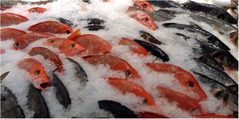 Cá đông lạnh ngon chẳng kém cá tươi