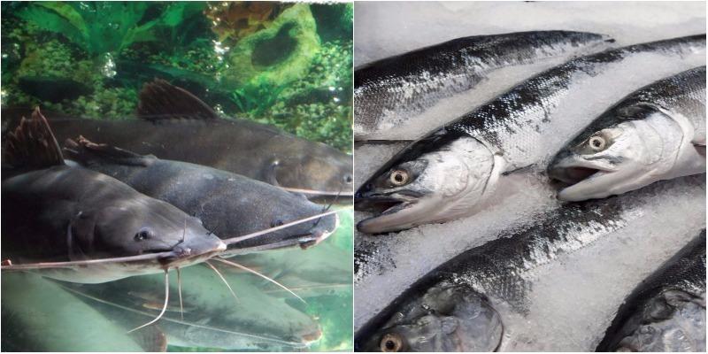 Cá tươi với cá đông lạnh: Loại nào tốt hơn?