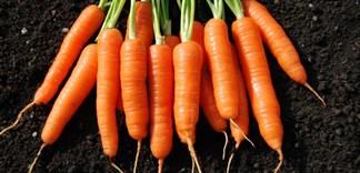 Nên ăn cà rốt sống hay chín?