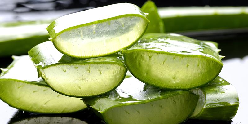 gel trong nha đam sẽ giúp môi bạn không bị khô nứt