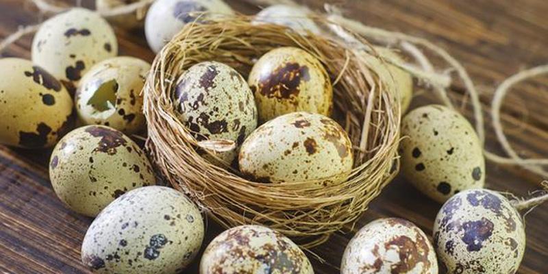 Điều gì sẽ xảy ra khi thường xuyên ăn trứng cút