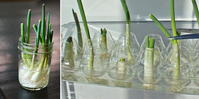 8 loại rau củ có thể trồng lại từ những phần gốc bỏ đi-3