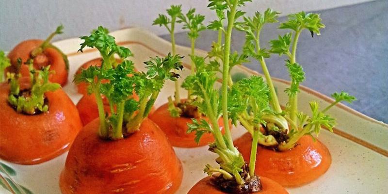 8 loại rau củ có thể trồng lại từ những phần gốc bỏ đi-4