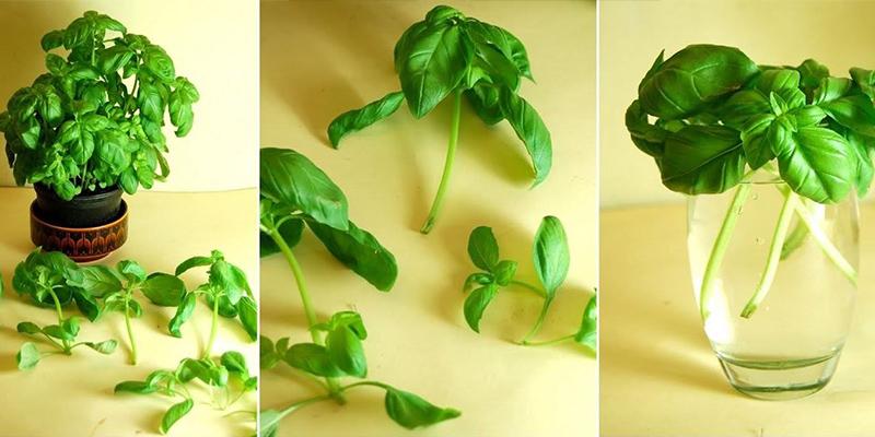 8 loại rau củ có thể trồng lại từ những phần gốc bỏ đi-6