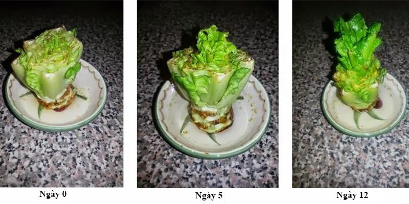 8 loại rau củ có thể trồng lại từ những phần gốc bỏ đi-7