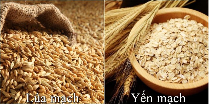 Lúa mạch, yến mạch có phải là một?