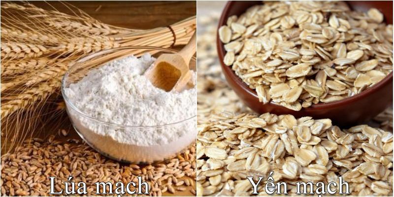 Lúa mạch và yến mạch là gì? Có phải là một và công dụng
