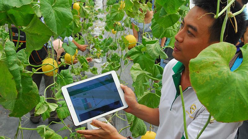 Hydroponics, phương pháp thủy canh kết hợp smartphone trong nông nghiệp - ảnh 5