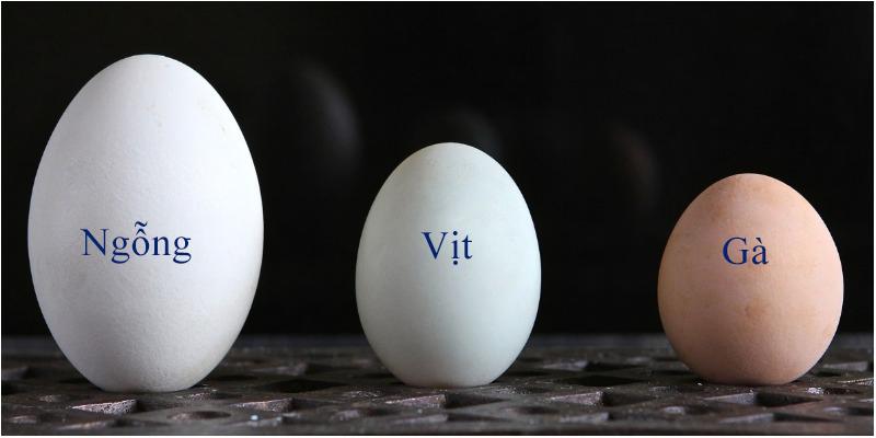 Mẹ bầu ăn trứng ngỗng có giúp con thông minh?