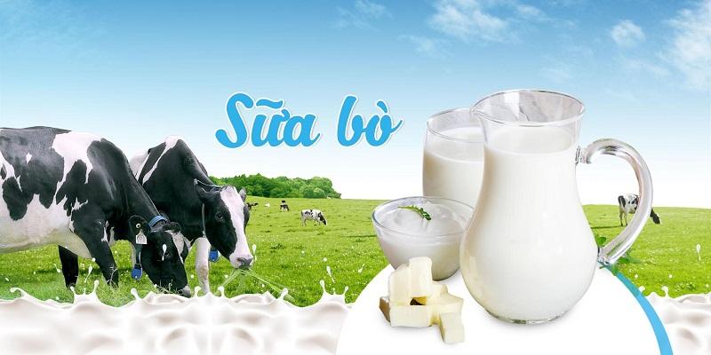 Sữa bò có hàm lượng đạm cao, giàu calci, photpho và sắt, thành phần khá giống sữa mẹ.