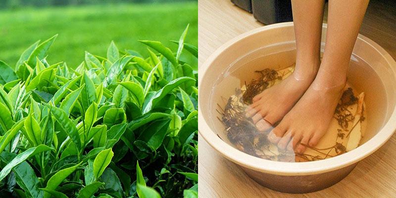 Trị hôi chân bằng lá trà xanh