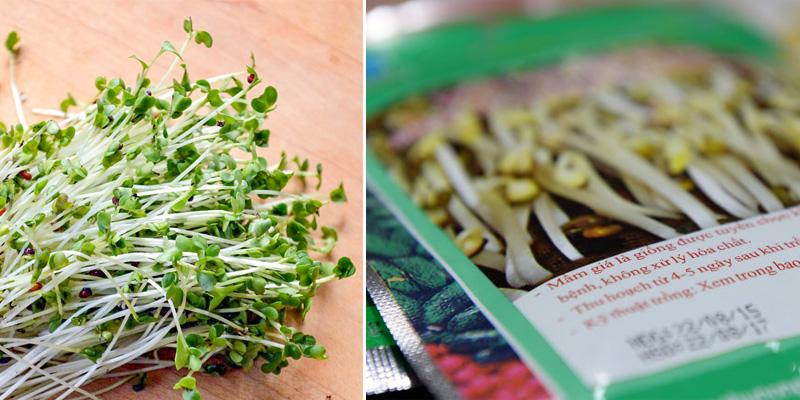 Rất nhiều loại hạt giống rau mầm không rõ nguồn gốc được bày bán trên thị trường