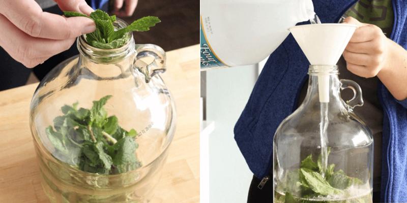 Đặt nhúm bạc hà để trong thùng chứa rồi đổ giẩm lên trên.
