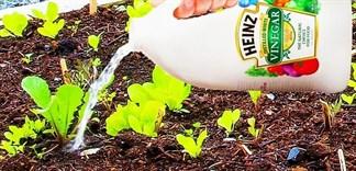 Đổ thứ này vào vườn rau bạn sẽ thấy điều bất ngờ