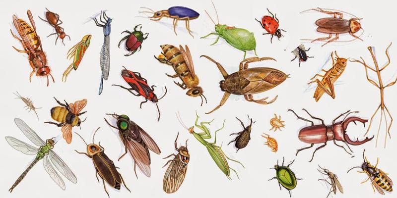 Đa số các loại côn trùng đều là vật gây hại sức khỏe và đời sống
