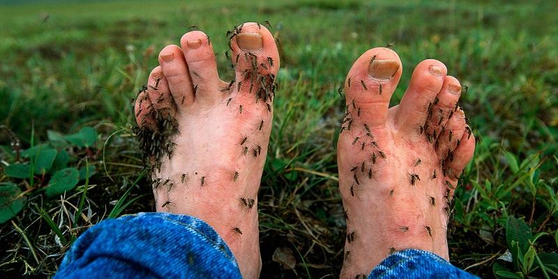 Những mẹo chống muỗi đốt cực đơn giản