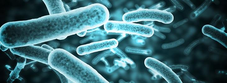 Vô hiệu hóa vi khuẩn