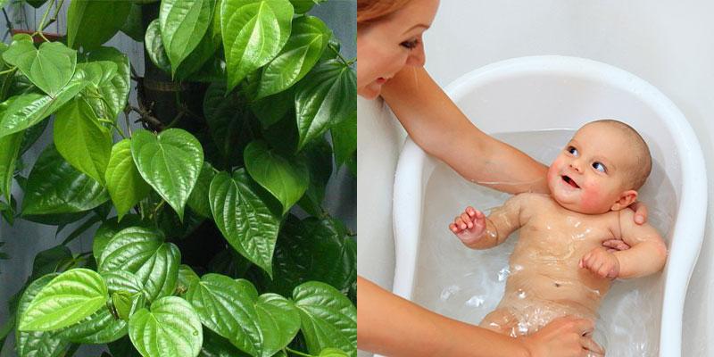 Dùng lá trầu không để tắm cho trẻ sơ sinh