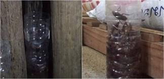 Cách người Thái diệt trăm con gián chỉ với một chai nhựa