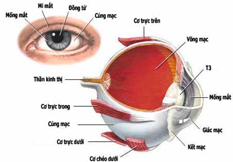 Triệu chứng và các dấu hiệu nhận biết chấn thương mắt