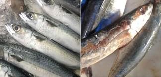 4 lợi ích của cá nục và 4 món cá nục cho bữa cơm ngon