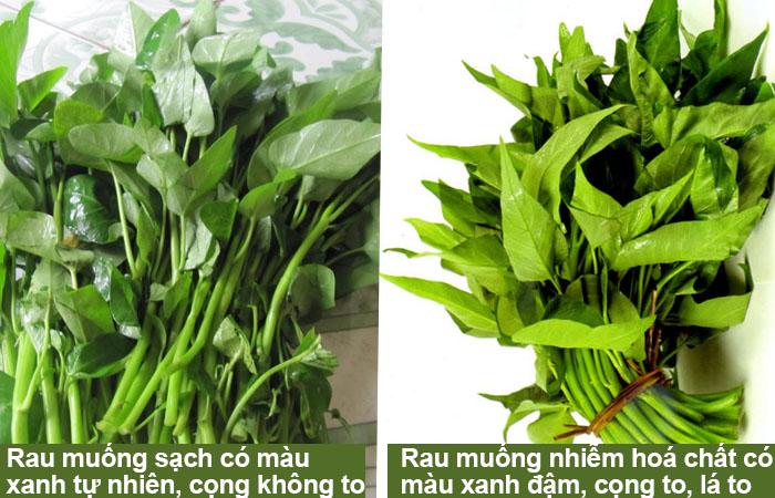 cach-nhan-biet-rau-muong-nhiem-hoa-chat-1-1 Cách nhận biết rau muống nhiễm hóa chất