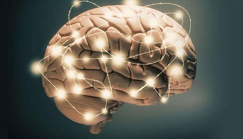 Dinh dưỡng cho trí não là gì?
