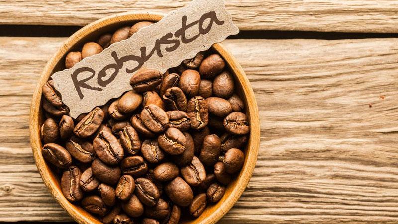 Cafe Robusta có vị gắt hơn, hạt tròn hơn và nhỏ hơn hạt cà phê Arabica