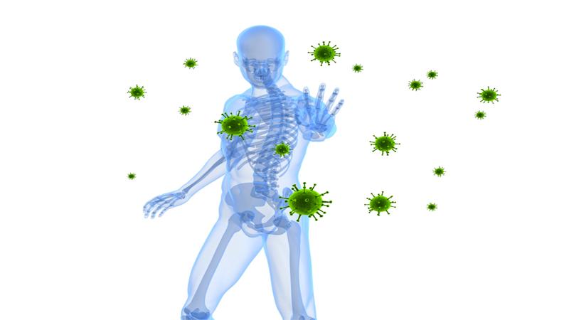 Tỏi đen giúp tăng cường hệ thống miễn dịch nhờ vào các đặc tính kháng virus, kháng nấm, kháng khuẩn và chống ký sinh trùng.