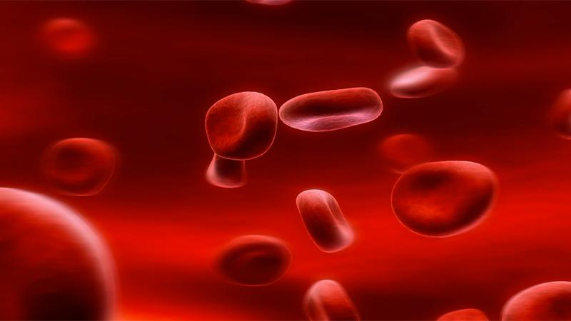 Không cung cấp đầy đủ chất sắt cho cơ thể chính là một trong những nguyên nhân gây ra tình trạng thiếu máu.