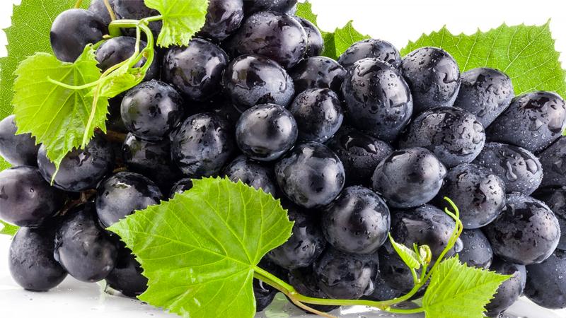 Nho chứa rất nhiều sắt, phốt pho, canxi, các vitamin và các axit amin.