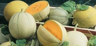 Phân biệt và công dụng 6 loại dưa phổ biến