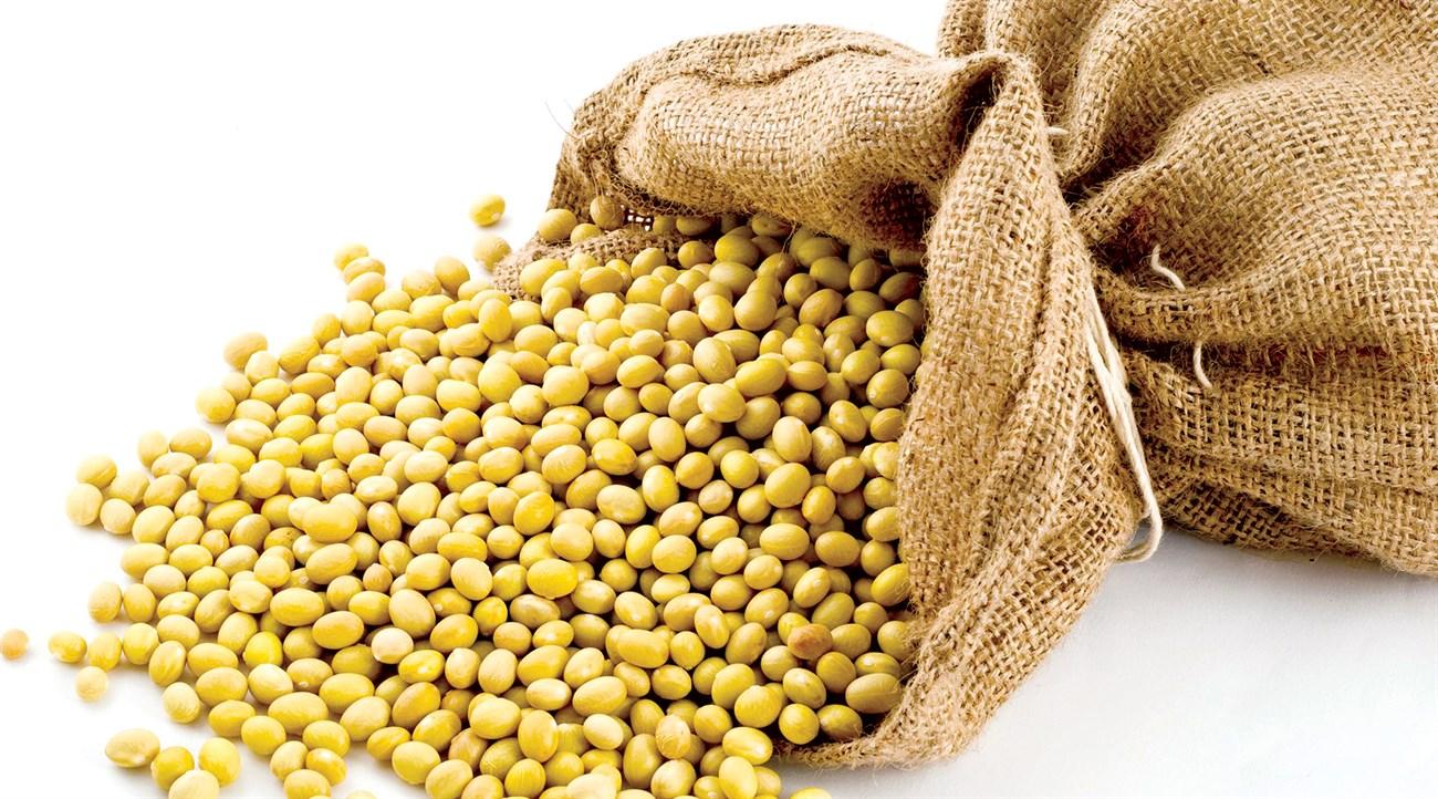 Đậu nành - nguyên liệu chính để làm đậu phụ
