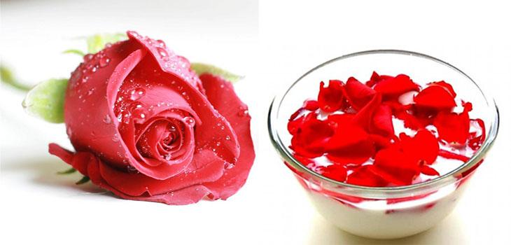 hoa hồng ngâm sữa để giữ ẩm đôi môi
