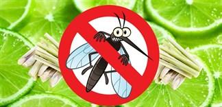 5 cách tránh muỗi đốt cực kì hiệu quả với tinh dầu sả chanh