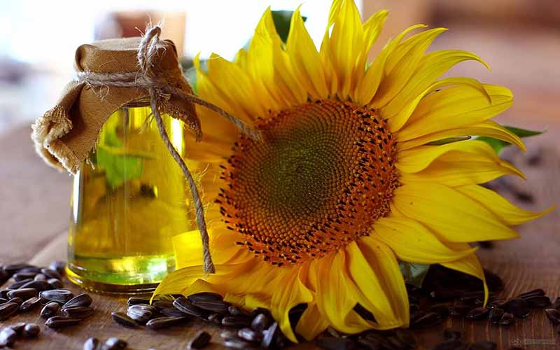 Dầu hướng dương là dầu không bay hơi, được ép từ hạt hướng dương, thường được sử dụng trong nấu ăn và công thức mỹ phẩm làm đẹp.