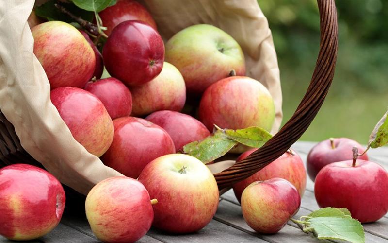 Với nguồn vitamin A, C, E và các chất chống oxy hóa mà táo có khả năng trung hòa lượng muối dư thừa (nguyên nhân dẫn đến các bệnh cao huyết áp, tim mạch, ung thư…) trong cơ thể.