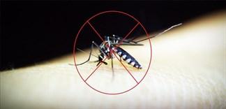 Ăn thực phẩm nào giúp chống muỗi hiệu quả?