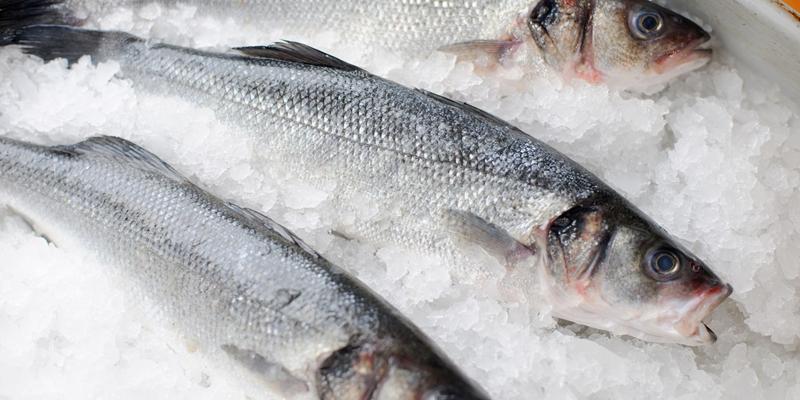 Một số loại cá biển chứa hàm lượng thủy ngân gây hại