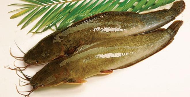 Nguyên liệu món ăn cá nướng bằng lò vi sóng