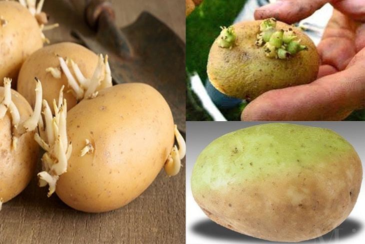 Khoai tây mọc mầm có thể gây nguy hiểm