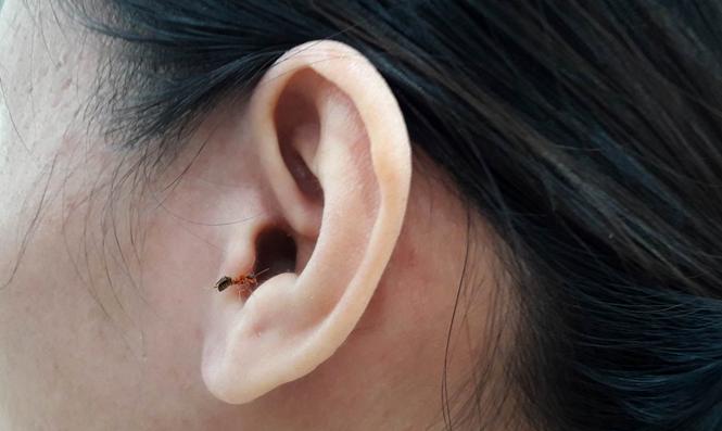 Cách nhận biết côn trùng chui vào tai và cách xử lý