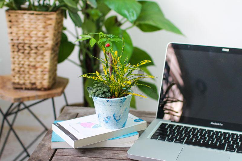 Mẹo giữ laptop luôn sạch, tránh côn trùng bò vào