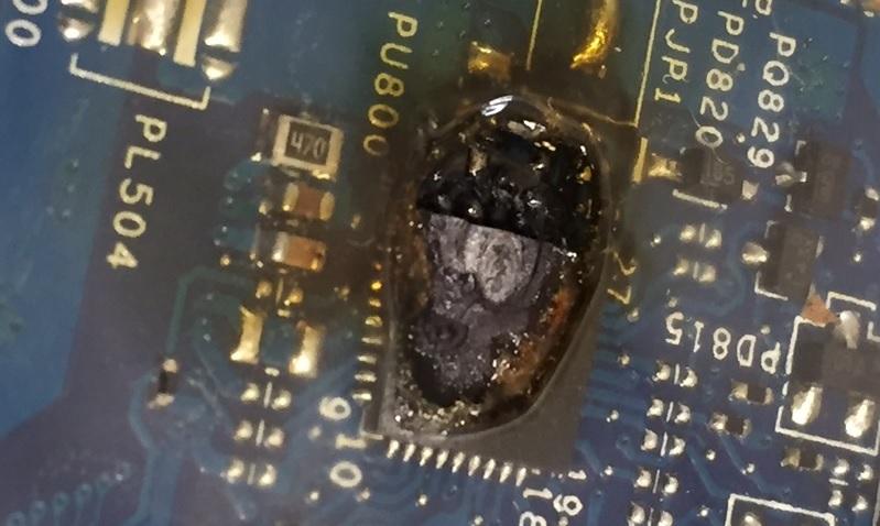 Kiến, côn trùng chui vào laptop có nguy hiểm không?