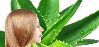 Công thức dưỡng tóc từ nha đam cho mái tóc bồng bềnh, óng ả