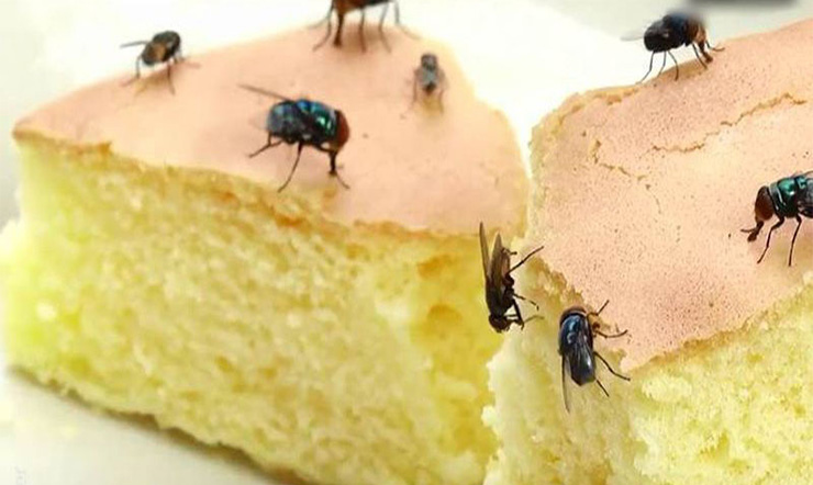 Đuổi ruồi bay sạch khỏi nhà chỉ với vài mẹo đơn giản